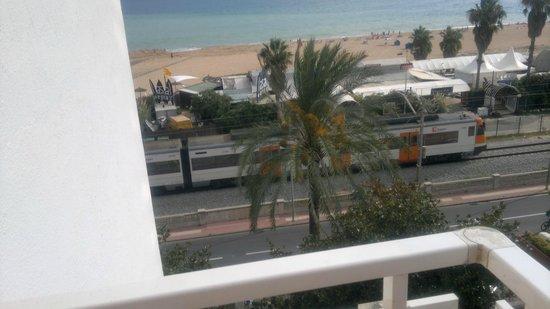Hotel Sorra Daurada Splash : Вот и те пальмы,где располагаются попугайчики крикуны!!!