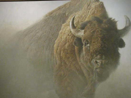 National Museum of Wildlife Art: Beautiful bison oil painting