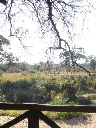 Umlani Bushcamp: view of watering hole from bar