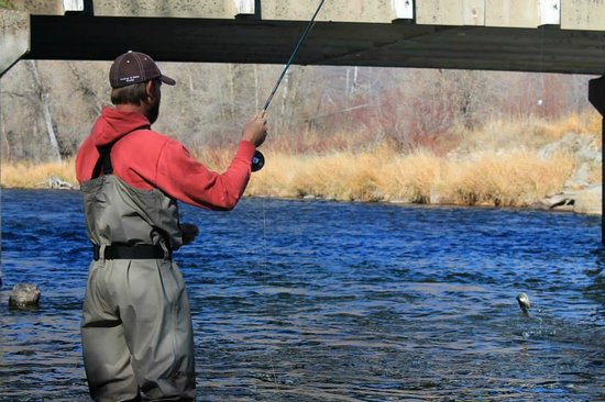 Utah Pro Fly Fishing Tours: Fish on the line!