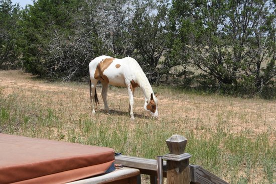 The Hideaway Ranch & Retreat : One of our visitors