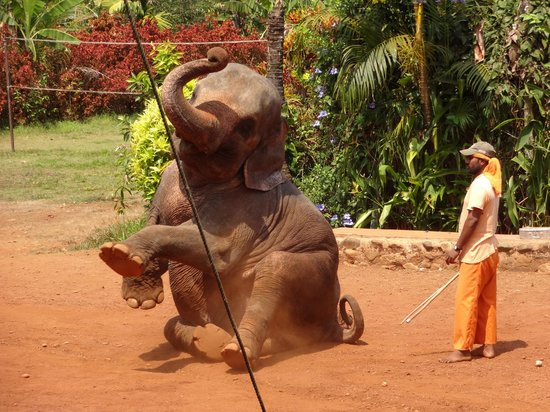 South Goa District, Indie: Elephant Show