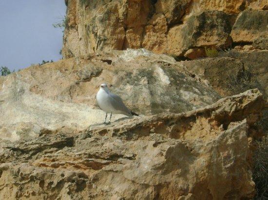 Playa Cala Salada: volatile  :)