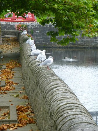 The Boulevard Guesthouse : Gulls on the rail outside B&B
