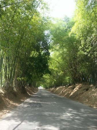 Kingsley's Take Care Tours - Day Tours: Bamboo Ave.