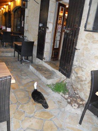 Hotel du Chateau : wild(?)life