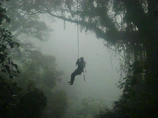 Monteverde Extremo Park: Tarzan Swing!  One of the 14 platforms on the canopy tour.
