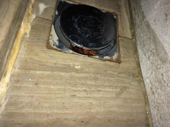 Sandos Finisterra Los Cabos: Cockroach in the bathroom