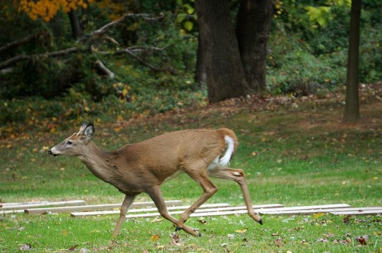 Deer spotted at Upton Hill Regional Park