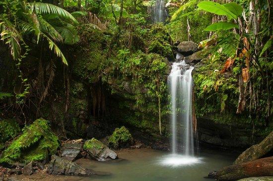 Island Walkers - El Yunque: Juan Diego Falls