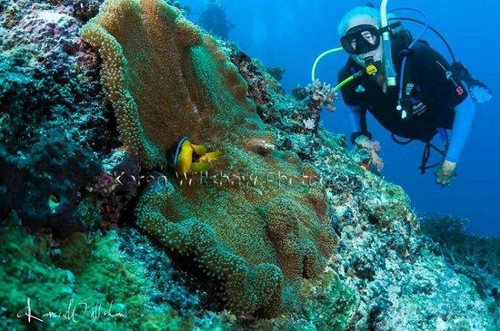 Matava - Fiji's Premier Eco Adventure Resort: Dieter plus friends