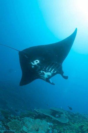 Matava - Fiji's Premier Eco Adventure Resort: Manta No 9
