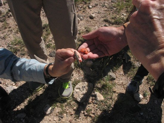 Outspire Hiking and Snowshoeing : Desert fauna - hiding in plain sight