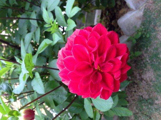 Arundina Cameron Highlands: Beautiful flowers
