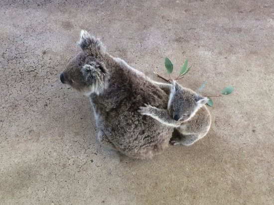 me and gemma picture of cohunu koala park byford. Black Bedroom Furniture Sets. Home Design Ideas