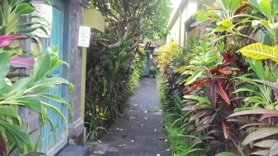 Aleesha Villas: Hotel grounds
