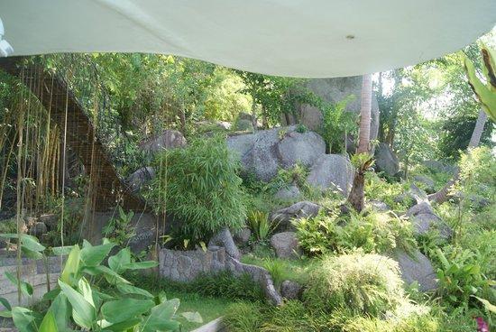 Monkey Flower Villas: végétation autour