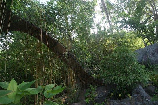 Monkey Flower Villas: le pont qui mène au toit
