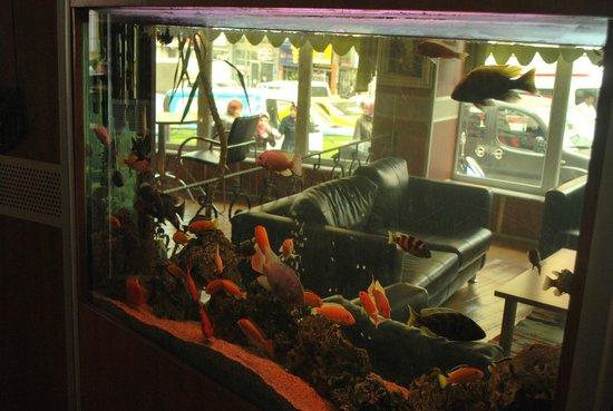 Hotel Topkapi: Lobby