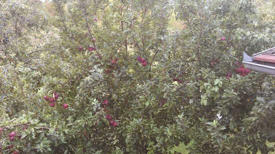 House Zupan: Apple tree view from balcony