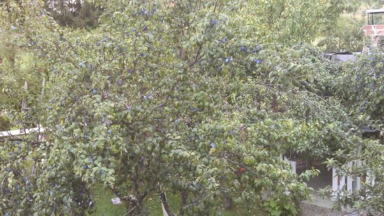 House Zupan: Plum tree view from balcony
