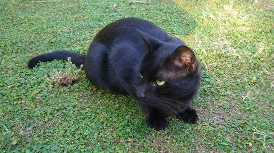 Barut Hemera : Beau chat noir