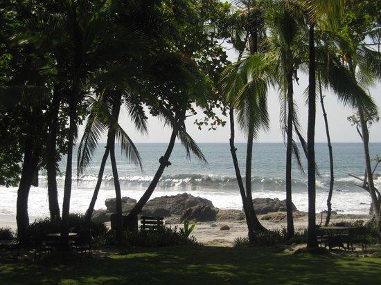 Ylang Ylang Beach Resort: Beach area