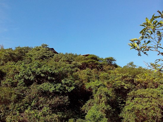 The Machan: view of the canopy from the jungle trail ..