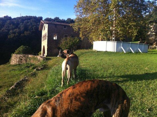 Casa Rural El Callis : parcela