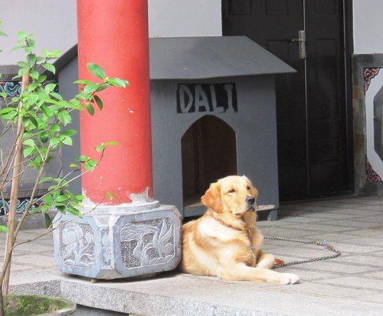 Yuan Lai Ge Inn: Dali the retriever keeps an eye on the proceedings.