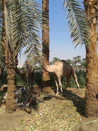 Al Baeirat Hotel: Spaziergang in direkter Umgebung