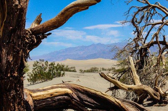 Mesquite Flat Sand Dunes: Sand Dune