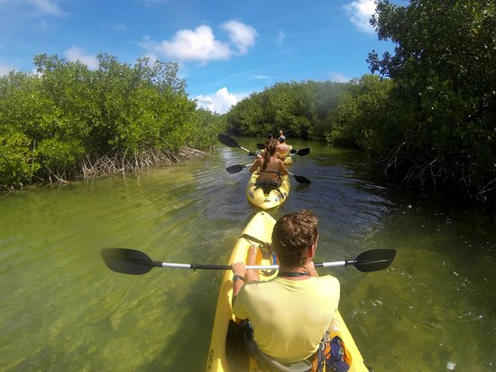 Mangrove Information Center Kayak & Snorkel Excursions: Kayakken in de mangroves van Bonaire