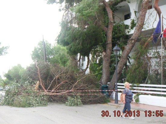 Club Martha's Aparthotel : Fallen tree on the hotel