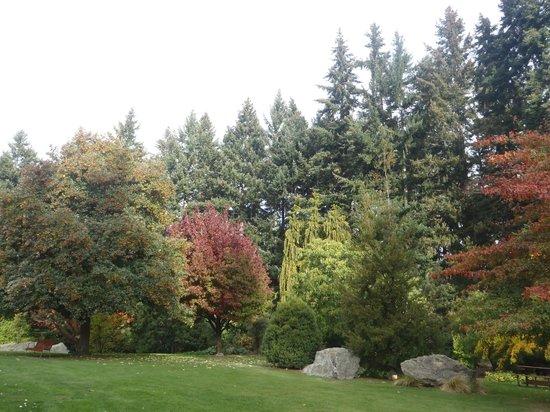 Queenstown Garden : Árvores no outono