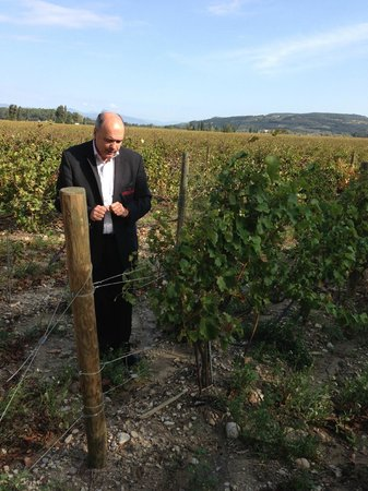 Avignon Wine Tours : Francois took us into the grapes!