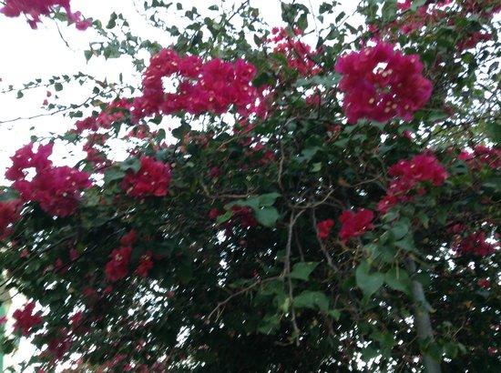 Hotel Kokobay: flores!