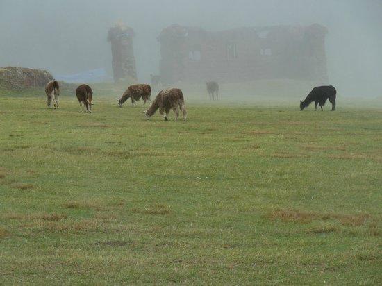 Alternative Inca Trails - Day Tours: Ruinas de Huchuy Qosqo