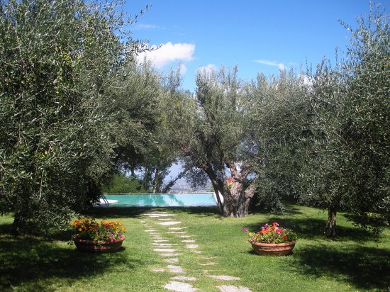 Villa Cicolina : The garden with olive trees and the beautiful infinity pool