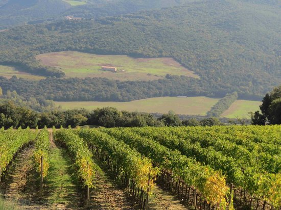 Tuscan Trails: Vinyards in Tuscany