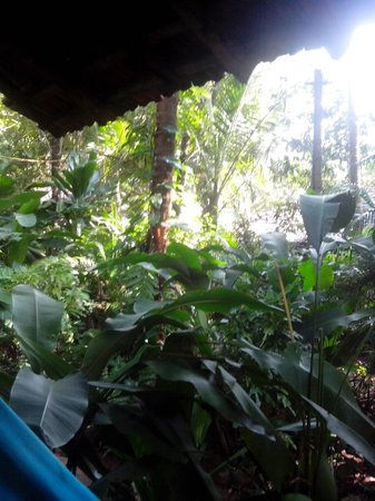 Bhakti Kutir: garden around the hut