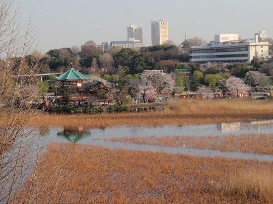 Hotel Coco Grand Ueno Shinobazu: View of Ueno cherry blossoms from room