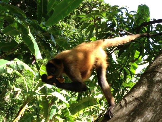 Puerto Barillas Marina & Lodge: Visita a isla de los monos