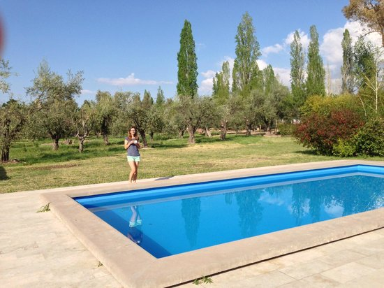 Posada Olivar: Pool + Olive trees in background