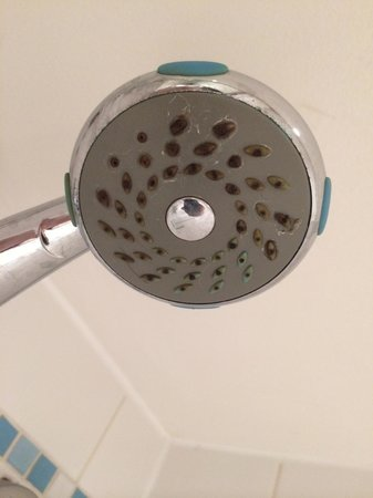 how to clean a mouldy shower head
