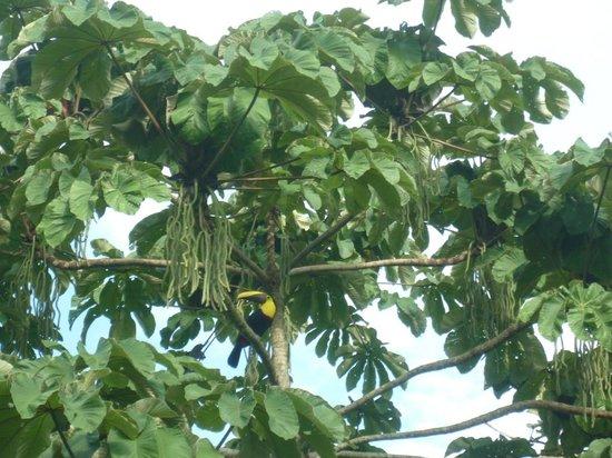 Arenal Palace: toucan