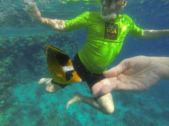 Four Seasons Resort Sharm El Sheikh: House Reef