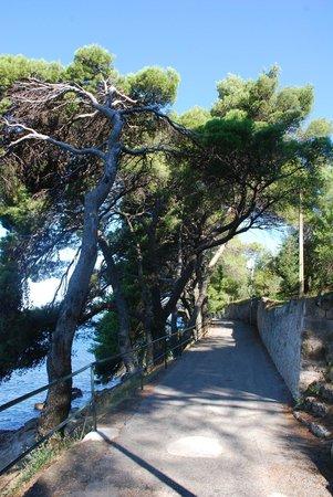 "Villa Andro apartments: 10 min walk to beautiful beach ""Kamen Mali"""