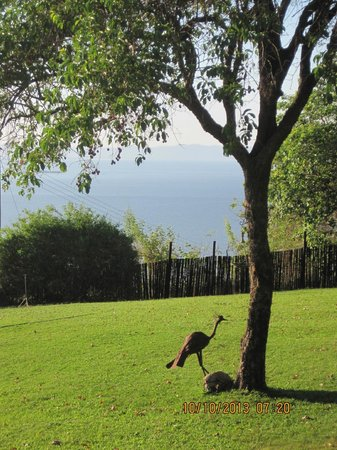 Hornbill Lodge: View from the lodge