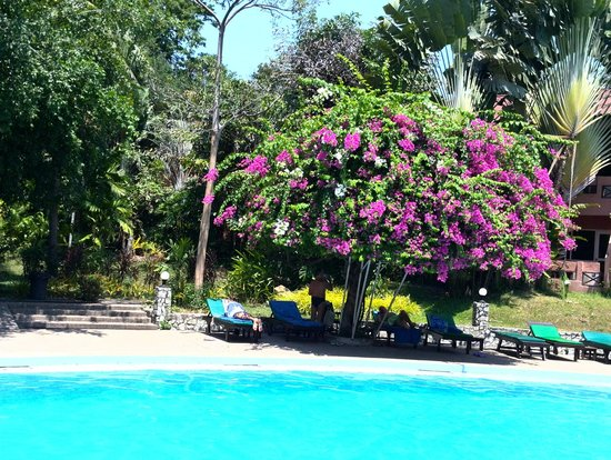 Loma Resort & Spa : Возле бассейна